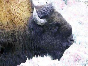 BullBison