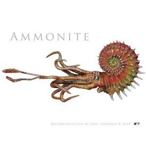 Ammonite-1-white