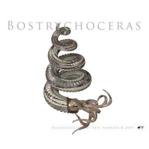 Bostrychoceras-white