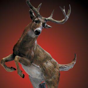 Elk, Moose and Deer