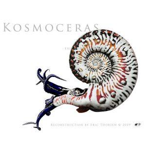 Kosmoceras-1-white