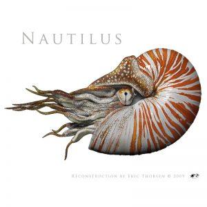 Nautilus-white
