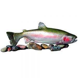 Trout-on-rocks-Rainbow